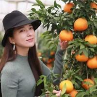 宁波象山定塘镇50亩柑橘田可做药肥示范 土地编号:264