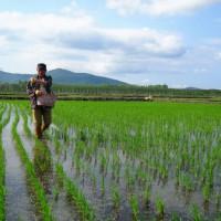 安徽省安庆怀宁县1020亩水田寻求水稻示范种植合作 土地编号:209
