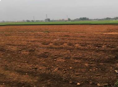平顶山郏县400亩水浇地5年起租土地肥沃水电齐全 土地编号:83