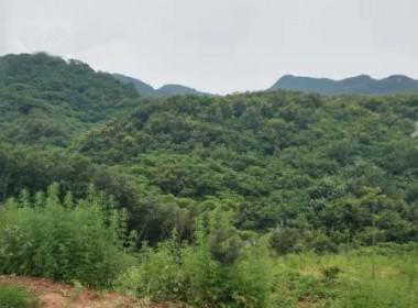 平顶山舞钢市3000亩荒山出租转让 土地编号:85