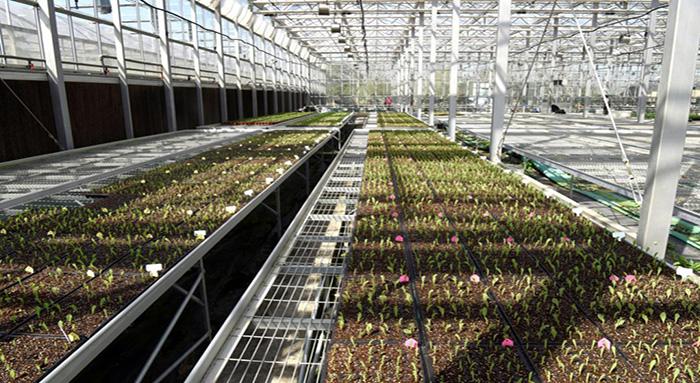 育苗打基础 玉米长势旺